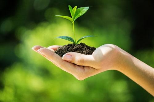Fernabsatzkauf von Bäumen – Widerrufsrecht?
